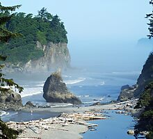 Mist- Ruby Beach, Wa. by Terrie Taylor