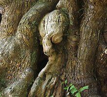 Alien Tree by Jon Lees