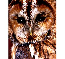 The Owl Photographic Print