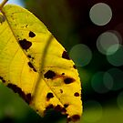 Leaf Light by ericafaye