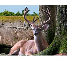 BUCK In The Woods Photographic Print