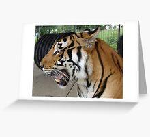 Zeus the Bengal Tiger Greeting Card