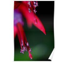 colour splash Poster