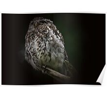 The Little Owl - None Captive Poster