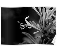 floral dragon Poster