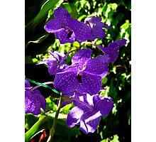 My Purple Beauty Photographic Print