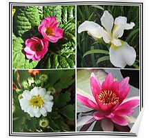 Flower Collage Featuring Deep Pink and White Flowers Poster