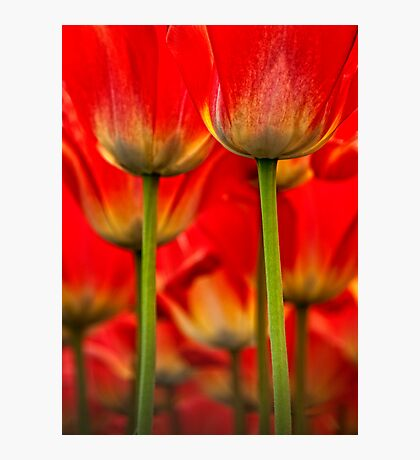 Seeing Red Photographic Print