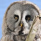 Great Grey Owl by Simone Kelly