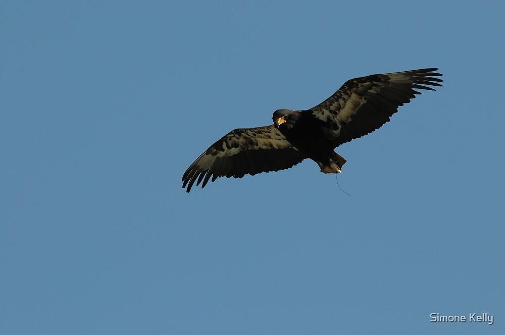 Bateleur Eagle 'Batty' by Simone Kelly