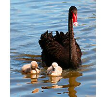 Swan Family Photographic Print