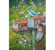 Rural Mailboxes, Bird and Butterfly Photographic Print