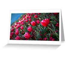 Rising Tulips Greeting Card
