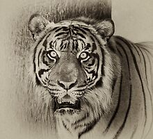 Sumatran Tiger by Ann J. Sagel