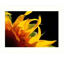 Sunflower petals Art Print