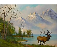 Elk at Wilderness Mountain Lake Photographic Print