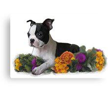 pretty puppy  Canvas Print