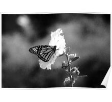 Infrared Butterfly Poster