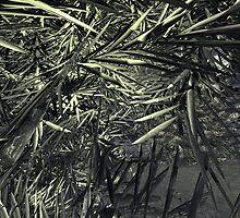 Bladed Ferns by XadrikXu