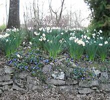 blue springs flowers by debkauble