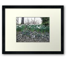 blue springs flowers Framed Print