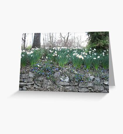 blue springs flowers Greeting Card