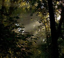 morning forest by debkauble