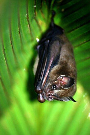 Tent-making Bat - Costa Rica by Jason Weigner