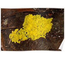 Mustard Mould Poster