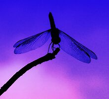 Dragonfly at Dusk by Marcia Rubin