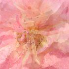 ~ She Scattered Paper Roses As She danced ~ by Sandra Cockayne
