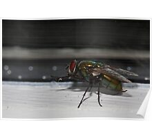 House Fly Macro Poster