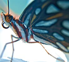 Floridian Butterfly by LaSan