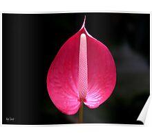Cairns Botanic Gardens 1 Poster