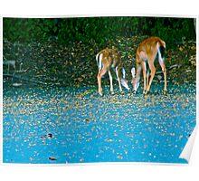 Dear Deers Poster