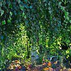 Cascade - Toronto Music Garden by olga zamora