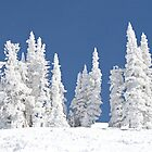 Snowclad Trees by emjaynie