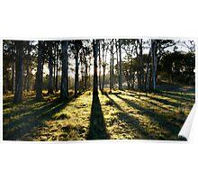 BLUE GUM SUN-BARRINGTON TOPS AUSTRALIA Poster