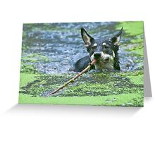 Playing Fetch Greeting Card