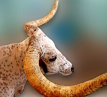 A Long Horn by vigor