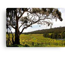 Vineyard Landscape in Springtime Canvas Print
