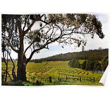 Vineyard Landscape in Springtime Poster