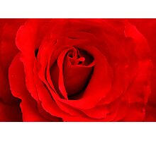Floral study in red Photographic Print