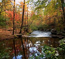 A Year of Autumn Splendor by Lisa G. Putman