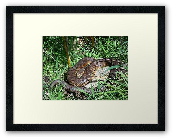 Copperhead Snake by Matthew Walmsley-Sims