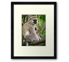 Mother and Baby Vervet Monkey Framed Print