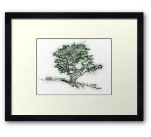 Tree Sketch Framed Print