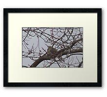Peek A Boo Dove Framed Print
