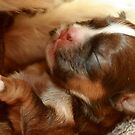 I am 3 days old!!!! by Susanne Correa