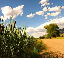 Country Road and Cattails, Utah. by JoAnn Glennie